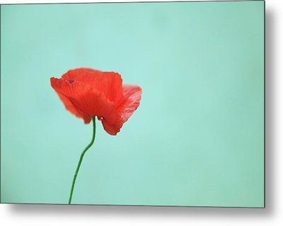 Simple Red Poppy On Turquoise Blue Metal Print by Poppy Thomas-Hill