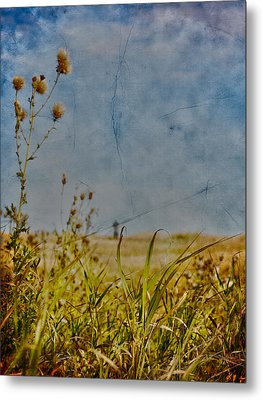 Singing In The Grass Metal Print by Empty Wall