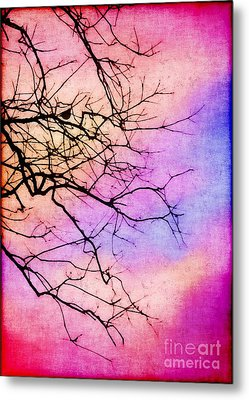 Singing In The Sunshine Metal Print by Judi Bagwell