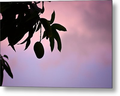 Single Mango On A Tree At Twilight Metal Print by Anya Brewley schultheiss