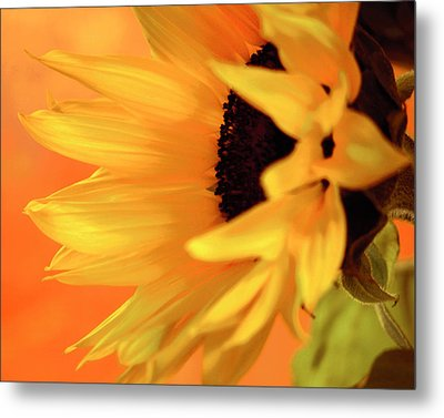 Metal Print featuring the photograph Single Sunflower by James Bethanis