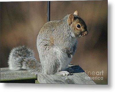 Metal Print featuring the photograph Sittin Pretty by Mark McReynolds