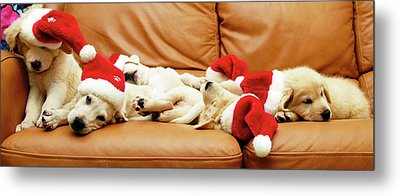 Six Puppies Sleep On Sofa, Some Wear Santa Hats Metal Print by Karina Santos