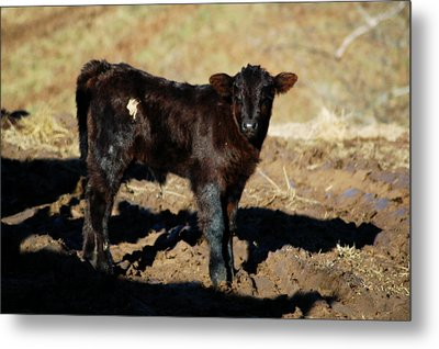 Sizing Me Up Metal Print by Cheryl Helms