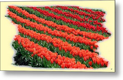 Skagit Valley Tulips 7 Metal Print