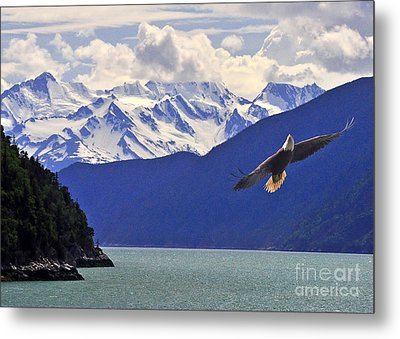 Metal Print featuring the photograph Skagway Bald Eagle by Jack Moskovita