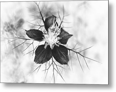 Skeleton Flower Metal Print by Michael Ambrose