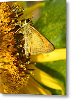 Skipper And Sunflower Metal Print by Sandi OReilly