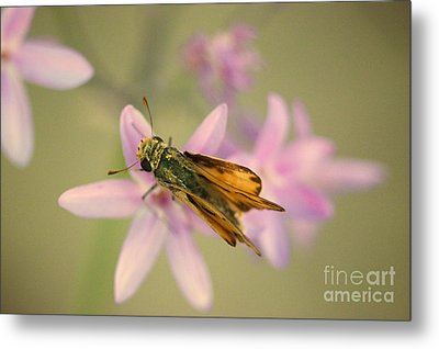 Skipper Butterfly Metal Print by Brooke Roby