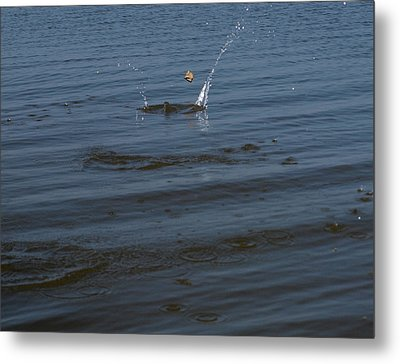 Skipping Stone Metal Print by Joshua House