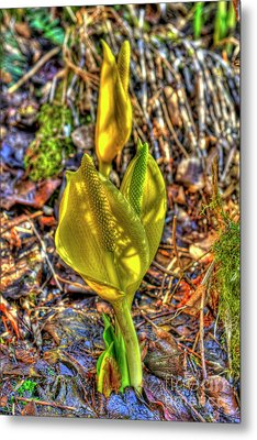 Skunk Cabbage - 2 Metal Print