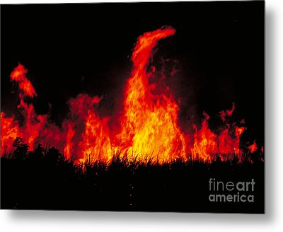 Slash And Burn Agriculture Metal Print by Dante Fenolio