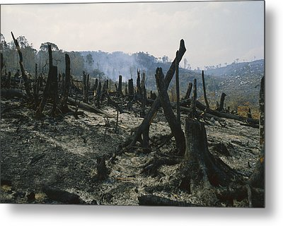 Slash And Burn Agriculture, Where Metal Print by Konrad Wothe