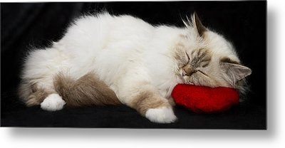 Sleeping Birman Metal Print