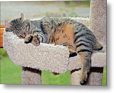 Sleeping Cat Metal Print by Susan Leggett
