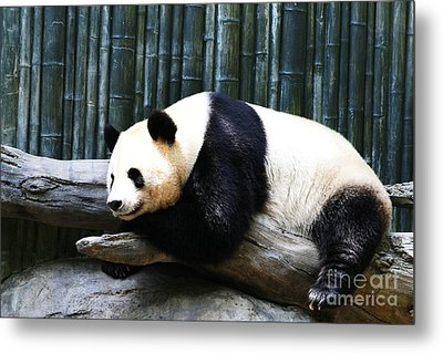 Sleeping Panda Metal Print