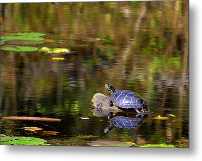 Slider In The Sun Metal Print by Mary Zeman