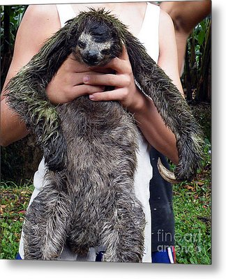 Sloth Metal Print by Vicky Tarcau