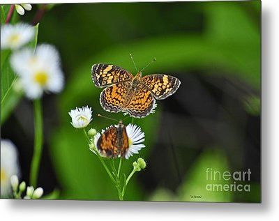 Small Butterfly Metal Print