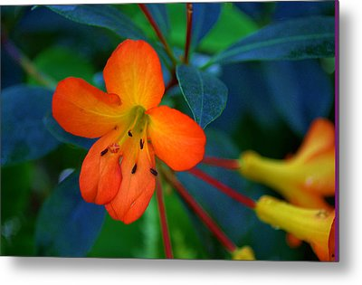 Metal Print featuring the photograph Small Orange Flower by Tikvah's Hope