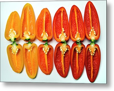 Small Sweet Peppers Metal Print by Image by Catherine MacBride