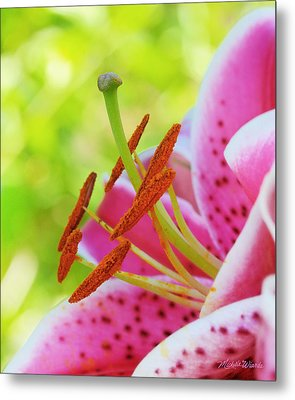 Smiling Face Mona Lisa Lily Metal Print by Michelle Wiarda