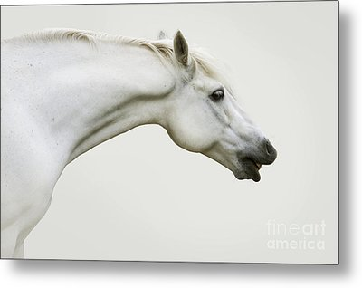 Smiling Grey Pony Metal Print by Ethiriel  Photography