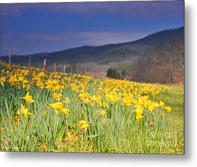 Smoky Mountain National Park Daffodil Spring Metal Print