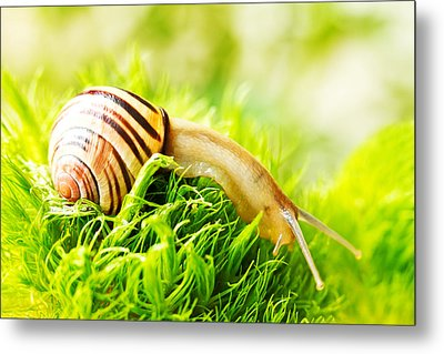Snail Metal Print by Copyright OneliaPG Photography