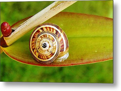 Metal Print featuring the photograph Snail On Leaf by Werner Lehmann