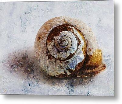 Snail Shell Metal Print by Ron Jones