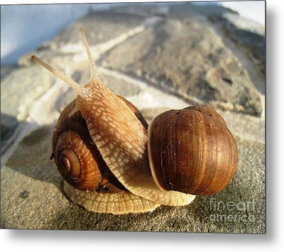 Snails 11 Metal Print by AmaS Art