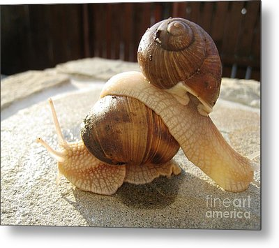 Metal Print featuring the photograph Snails 17 by AmaS Art