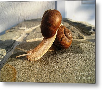 Metal Print featuring the photograph Snails 18 by AmaS Art