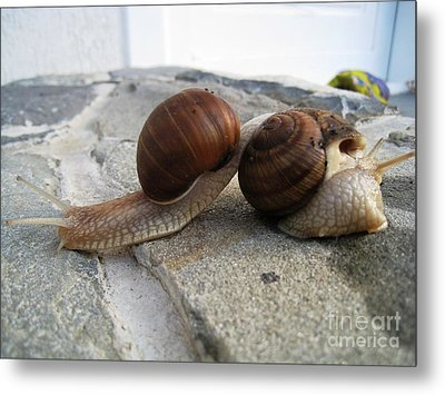 Snails 19 Metal Print by AmaS Art