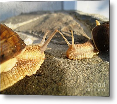 Metal Print featuring the photograph Snails 2 by AmaS Art