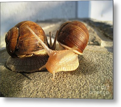 Snails 22 Metal Print by AmaS Art