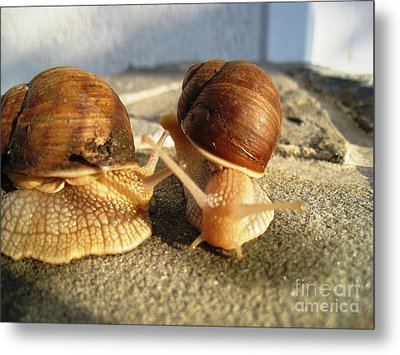 Snails 23 Metal Print by AmaS Art