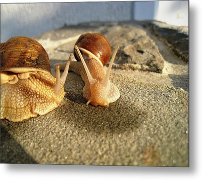 Snails 24 Metal Print by AmaS Art