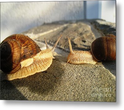 Metal Print featuring the photograph Snails 3 by AmaS Art