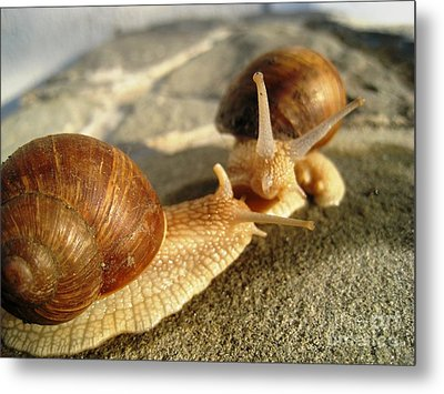 Snails 4 Metal Print by AmaS Art