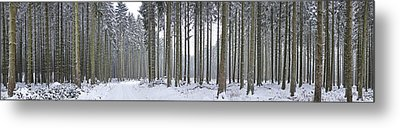 Snow-covered Forest In Winter Metal Print by Hans-Peter Merten