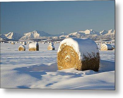 Snow-covered Hay Bales Okotoks Metal Print by Michael Interisano