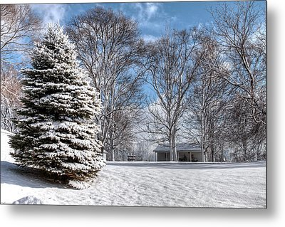 Snow Covered Pine Metal Print by Richard Gregurich
