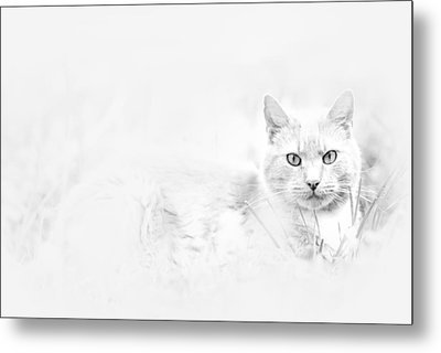 Snow Eyes Metal Print
