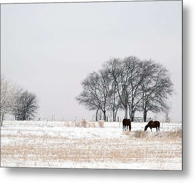 Snow Horses Metal Print