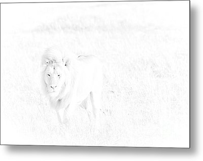 Snow Lion Metal Print by Darcy Michaelchuk