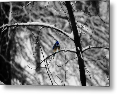 Snow On Beak Metal Print