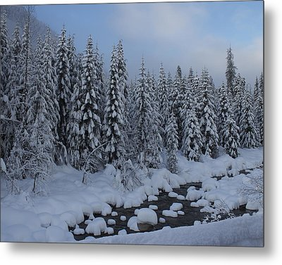 Snow Pines Metal Print by Sylvia Hart