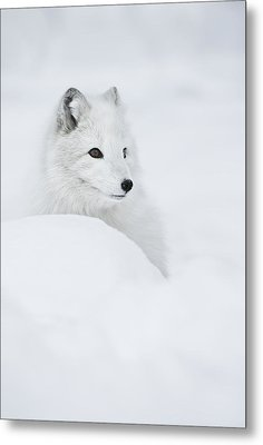 Snow Queen Metal Print by Andy Astbury